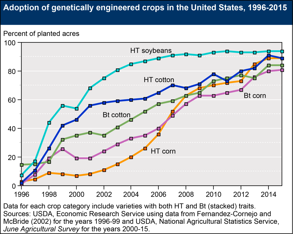Using Genetically Engineered Corn In Products Designed For Human Consumption